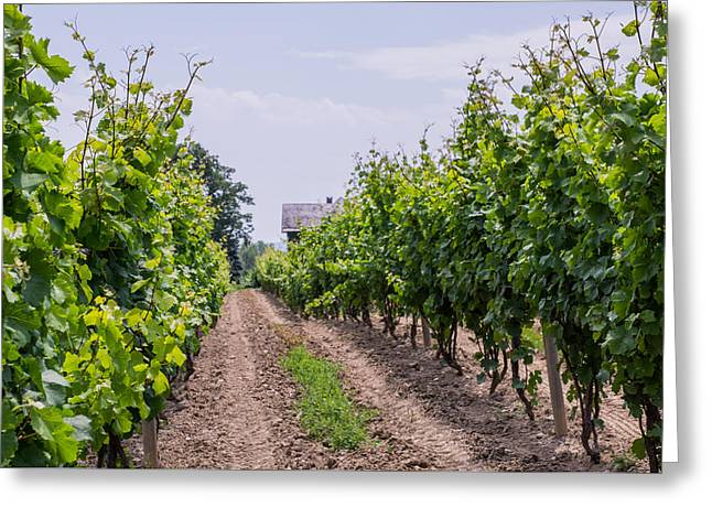 Grape Vineyard Greeting Cards - Vineyards of old Color Horizontal Greeting Card by Photographic Arts And Design Studio