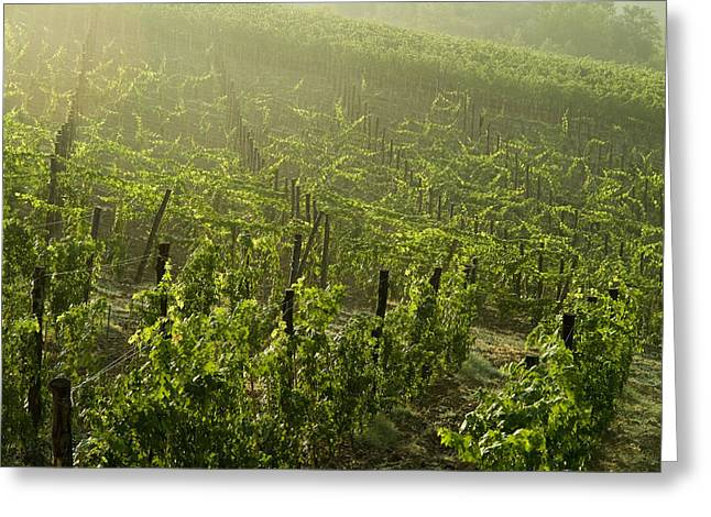 Vineyards Shrouded In Fog Greeting Card by Todd Gipstein