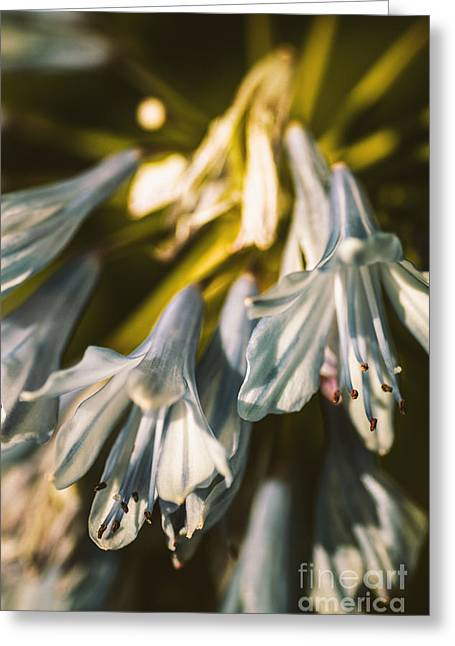 Vintage Agapanthus Flower Greeting Card by Jorgo Photography - Wall Art Gallery