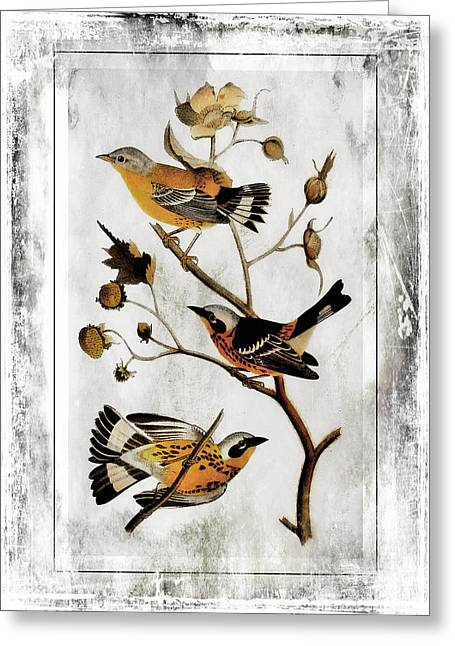 Black Lodge Digital Greeting Cards - Vintage Birds of Class-JP2845 Greeting Card by Jean Plout
