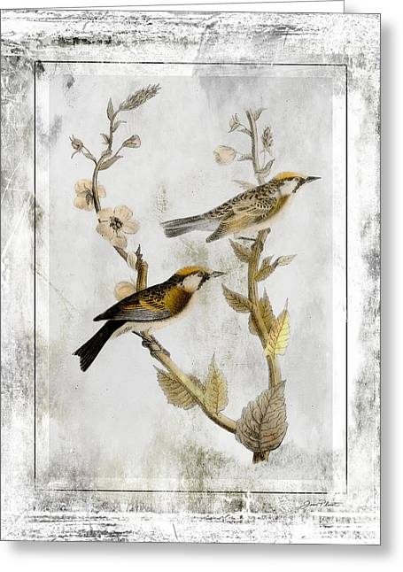 Black Lodge Digital Greeting Cards - Vintage Birds of Class-JP2846 Greeting Card by Jean Plout