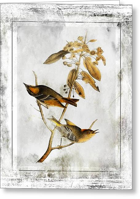 Black Lodge Digital Greeting Cards - Vintage Birds of Class-JP2847 Greeting Card by Jean Plout