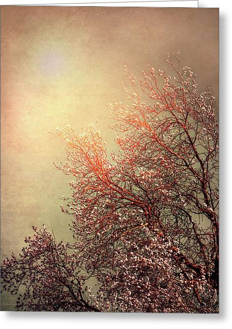 Vintage Cherry Blossom Greeting Card by Wim Lanclus