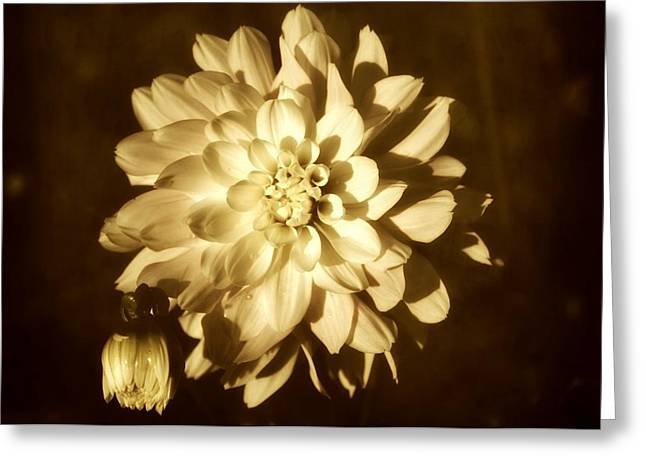 Portland Photography Greeting Cards - Vintage Dahlia Greeting Card by Cathie Tyler