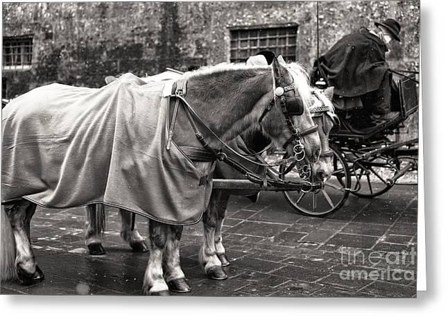 Art In Salzburg Greeting Cards - Vintage Horses in Salzburg Greeting Card by John Rizzuto