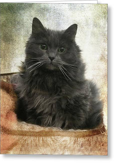 Kitten Prints Greeting Cards - Vintage Kitten Print Greeting Card by Joann Vitali