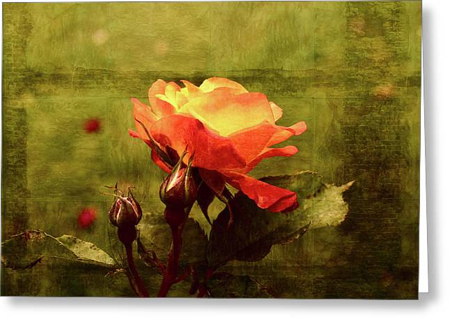 Vintage Rose Greeting Card by Bonnie Bruno