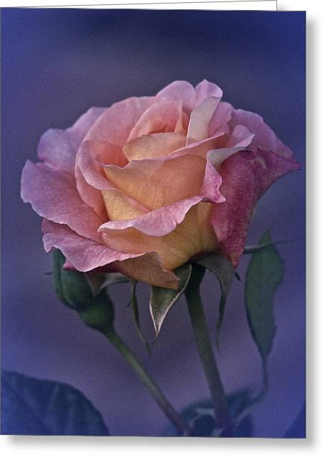 Vintage Greeting Cards - Vintage Rose May 2015 Greeting Card by Richard Cummings