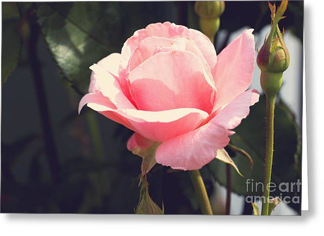 Renewing Greeting Cards - Vintage Rose Greeting Card by Rebecca Davis