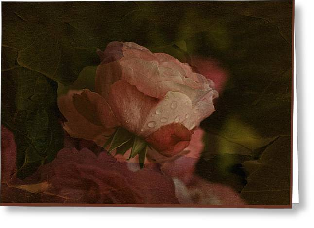 Drop Tapestries - Textiles Greeting Cards - Vintage Rose with Droplets Greeting Card by Richard Cummings