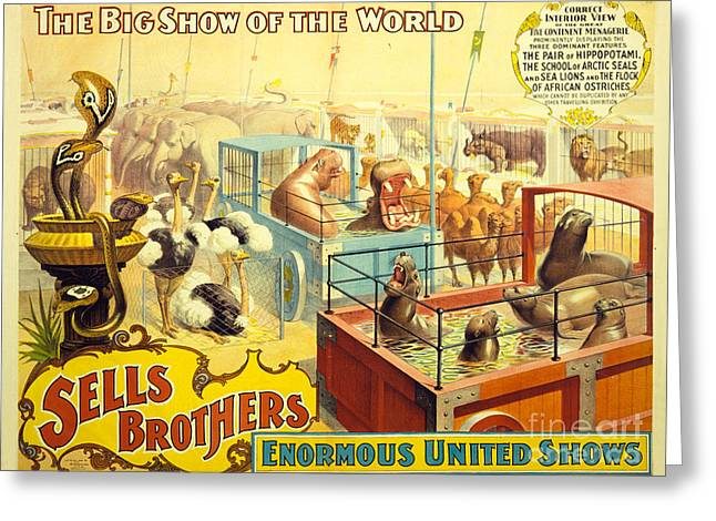 Vintage Sells Brothers' Circus Poster 2-6  Greeting Card by MMG Archives