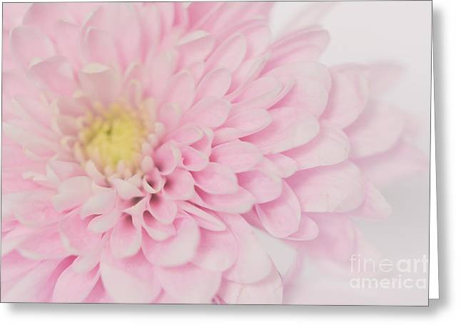 Vintage Soft Greeting Card by SK Pfphotography