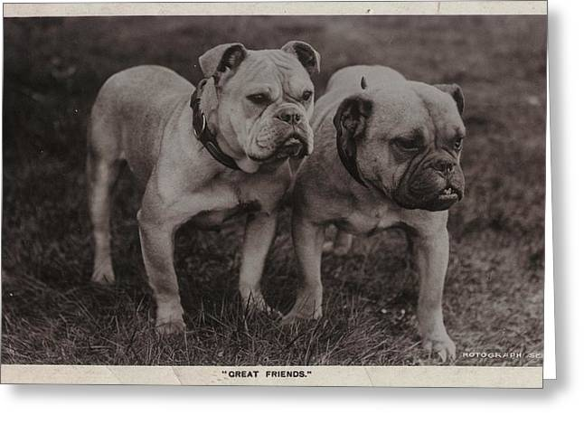 Dog Photographs Greeting Cards - Vintage Two Bulldogs Greeting Card by Gillham Studios