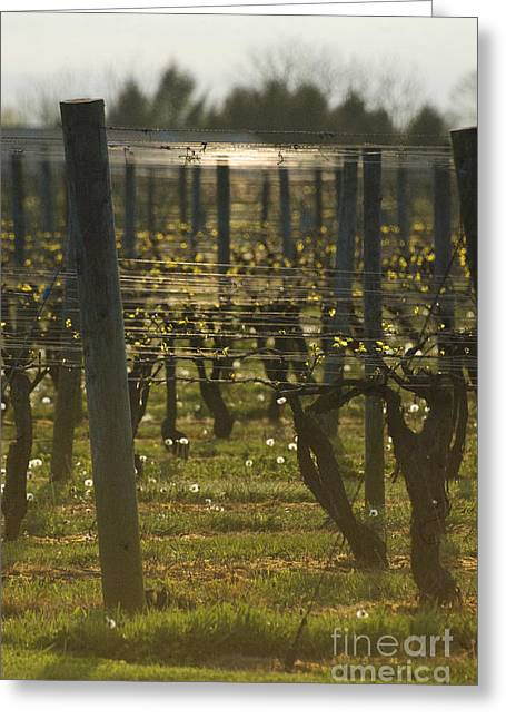 Hamptons Greeting Cards - Vintage winery vineyard at dusk - Long Island NY Greeting Card by ArtyZen Studios - ArtyZen Home
