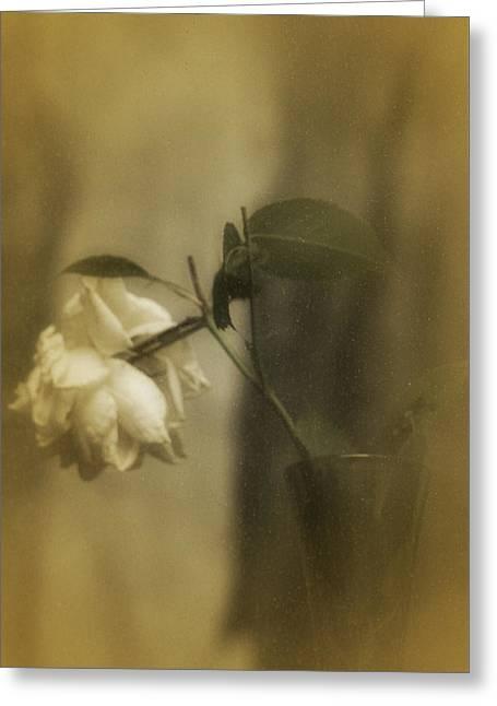 Glass Vase Greeting Cards - Vintage White Rose in Vase Greeting Card Greeting Card by Richard Cummings