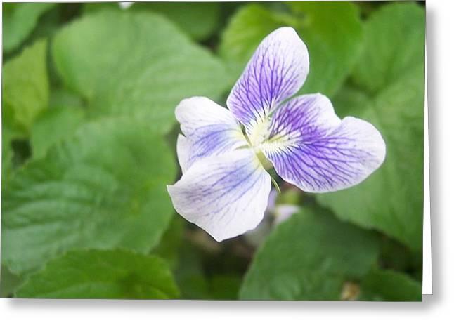 Violet 1 Greeting Card by Anna Villarreal Garbis