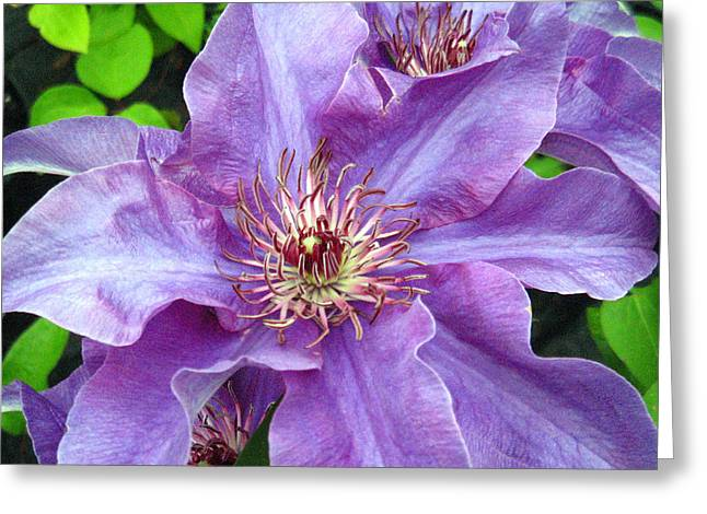 Fine Art Photography Pyrography Greeting Cards - Violet Beauty Greeting Card by Roxanne Marshal