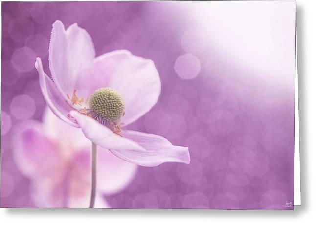 Poppy Decorations Greeting Cards - Violet Breeze Greeting Card by Lisa Knechtel