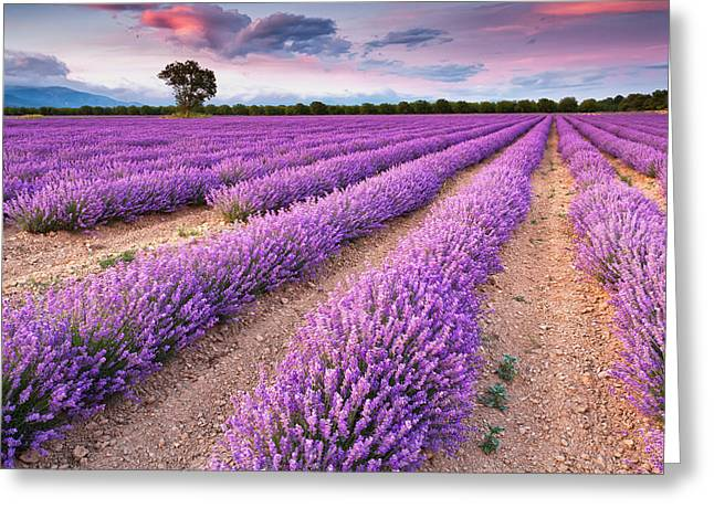 Lavender Fields Greeting Cards - Violet Dreams Greeting Card by Evgeni Dinev