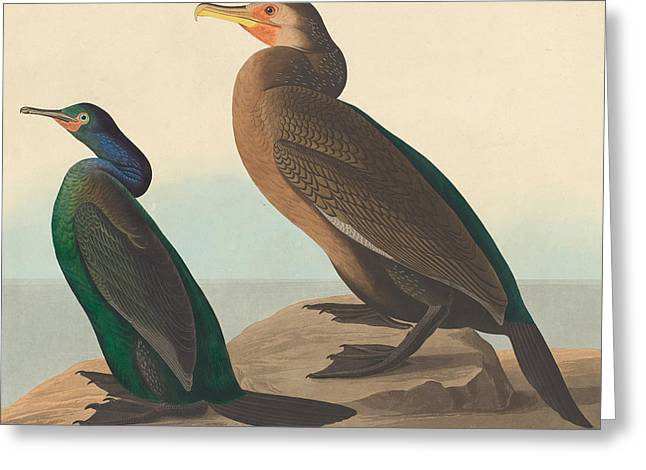 Violet Green Cormorant And Townsend's Cormorant Greeting Card by John James Audubon