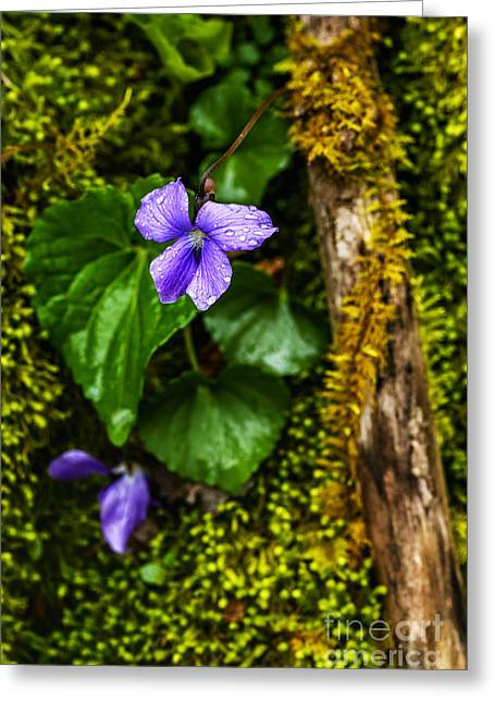 Raining Greeting Cards - Violet in the Rain Greeting Card by Thomas R Fletcher