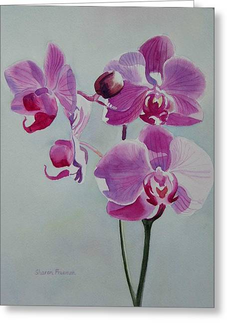 Orchid Greeting Cards - Violet Orchid Greeting Card by Sharon Freeman