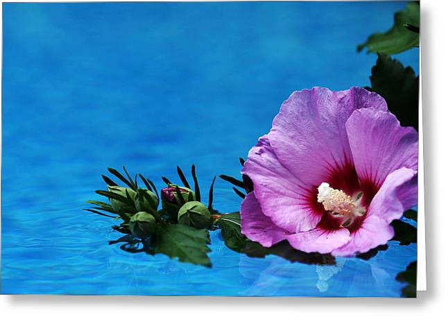 Blue Green Water Greeting Cards - Violet Satin Greeting Card by Debbie Oppermann