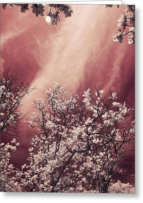 Violet Sky Greeting Card by Mario Bennet