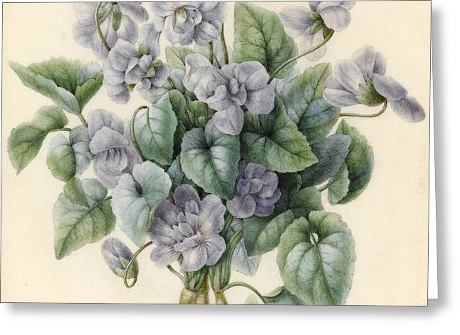 Violets  Greeting Card by Aline Corbin