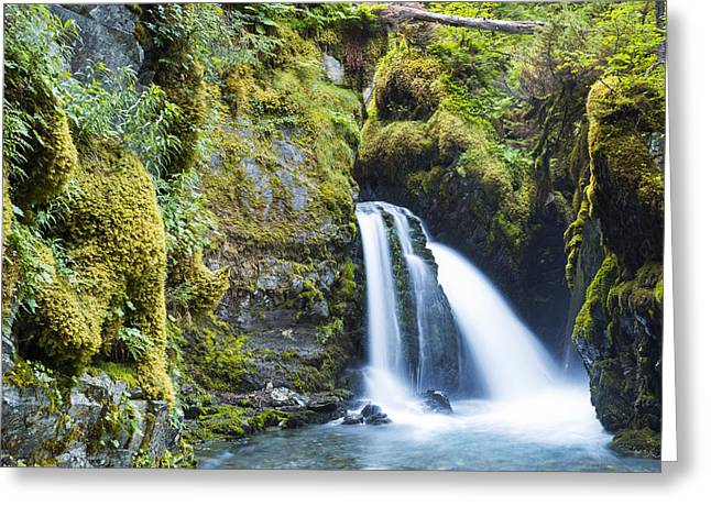 North American Vine Greeting Cards - Virgin Creek Falls  Girdwood, Alaska Greeting Card by Michael DeYoung