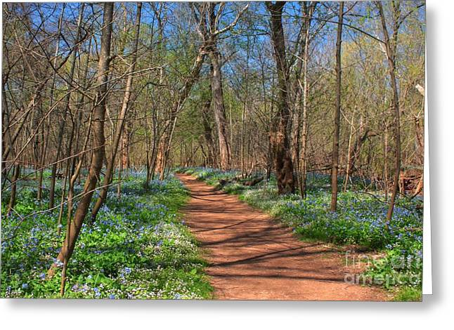 Centreville Greeting Cards - Virginia Bluebells Greeting Card by Cortney Price