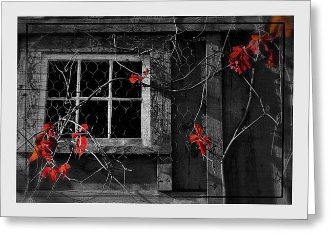 New England Barns Greeting Cards - Virginia Creeper Greeting Card by Thomas Schoeller