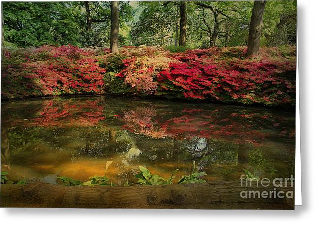Water Garden Greeting Cards - Vivid Dreams Greeting Card by Jasna Buncic