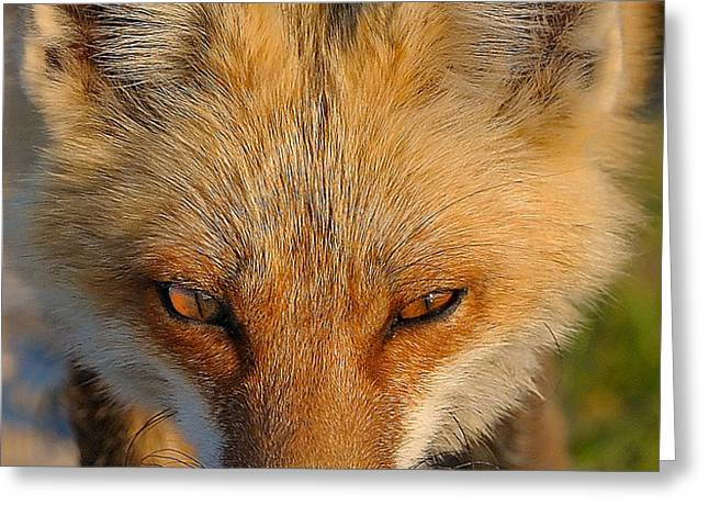 Vixen Greeting Card by William Jobes