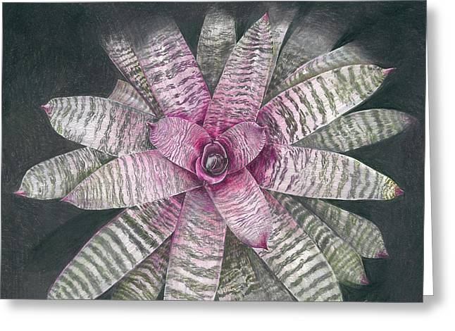 Bromeliad Greeting Cards - Vriesea Memoria Howard Yamamoto Greeting Card by Penrith Goff