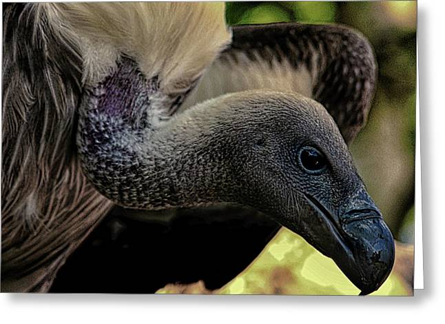 Vulture Greeting Card by Martin Newman