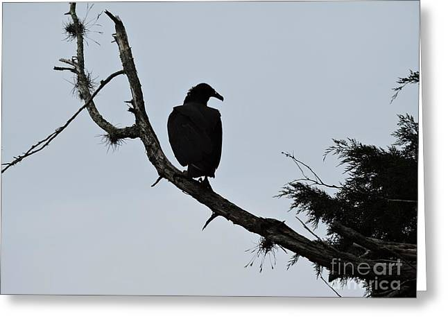 Vulture Silhouettes Greeting Cards - Vulture Silhouette Greeting Card by Beth Williams