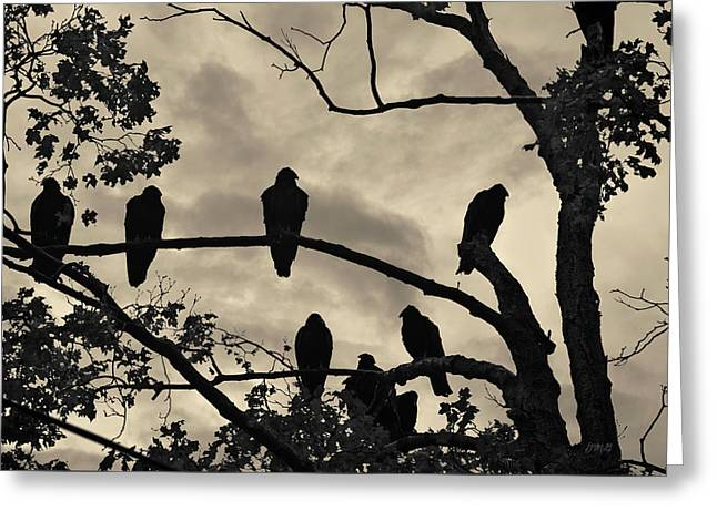 Vultures And Cloudy Sky Greeting Card by David Gordon