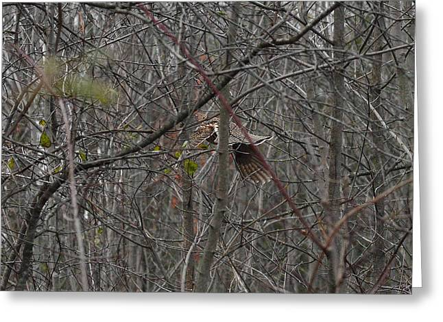 Hunting Bird Greeting Cards - Vvvrrrooommm it is the Ruffed Grouse Greeting Card by Asbed Iskedjian