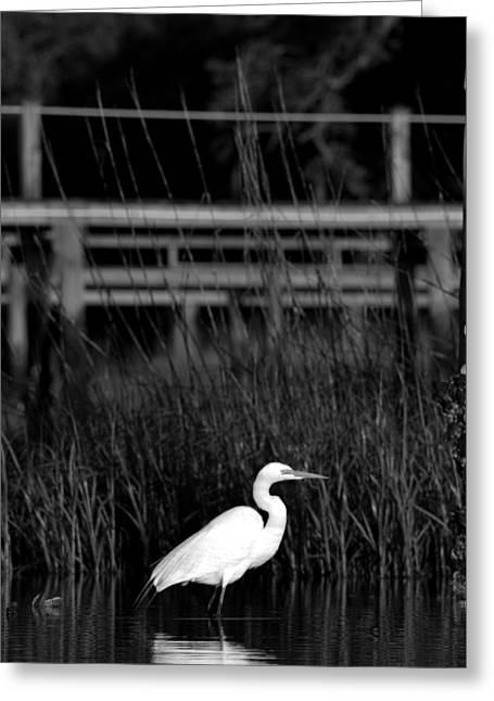 Wade Fishing Greeting Cards - Wading Heron Greeting Card by Tom Rickborn