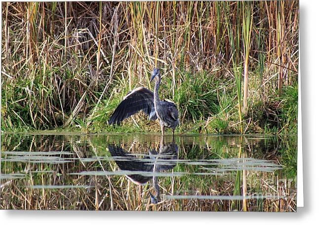 Reflection In Water Greeting Cards - Wading In Heron Greeting Card by Cathy  Beharriell