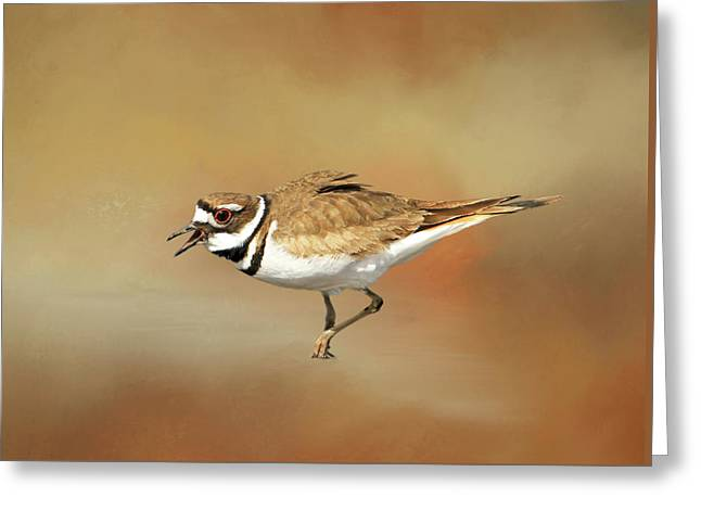 Wading Killdeer Greeting Card by Donna Kennedy