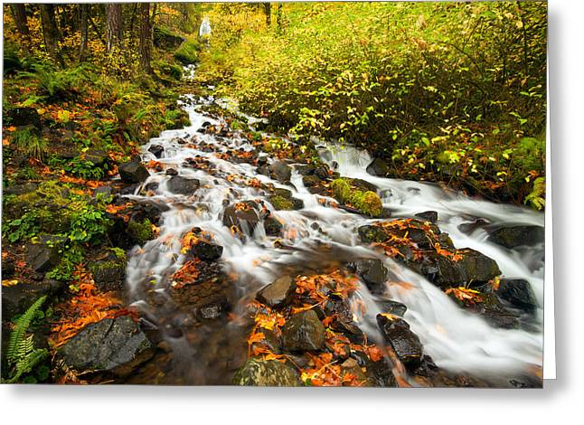 Stream Greeting Cards - Wahkeena Autumn Greeting Card by Mike  Dawson