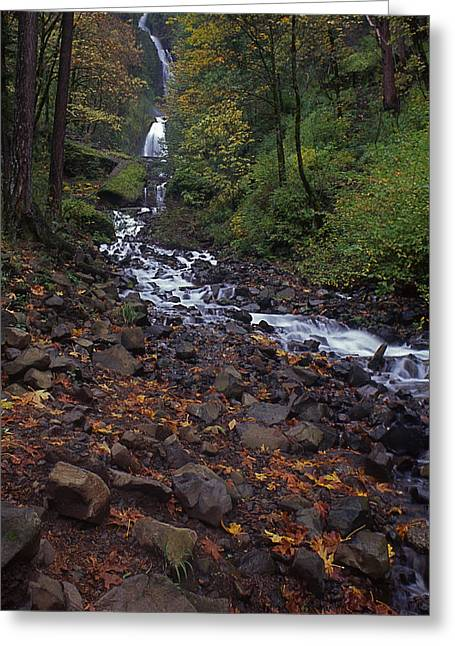 Pouring Greeting Cards - Wahkeena Falls Greeting Card by Todd Kreuter