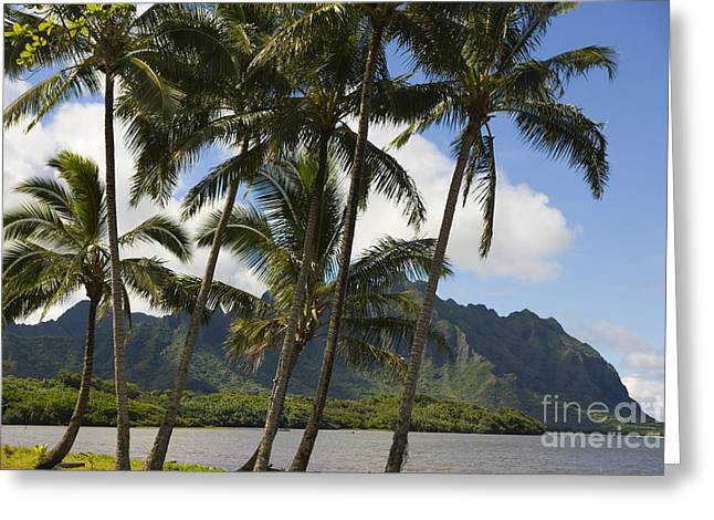Ocean Art Photos Greeting Cards - Waikane Beach Park Greeting Card by Dana Edmunds - Printscapes