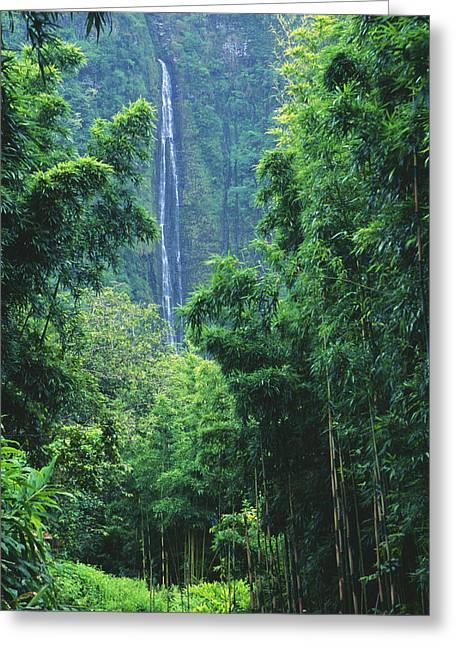 Mountainside Art Greeting Cards - Waimoku Falls Greeting Card by Dave Fleetham - Printscapes