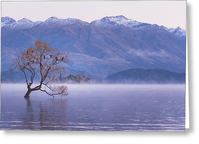 Willow Lake Greeting Cards - Waiting for Dawn Greeting Card by Robert Green