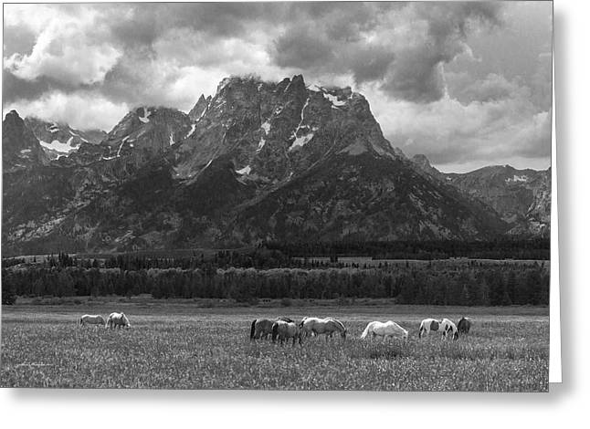 The Horse Greeting Cards - Waiting for the Storm in Wyoming Greeting Card by Sam Sherman