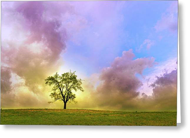 Waiting For The Storm Greeting Card by Rima Biswas