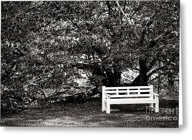 Park Benches Photographs Greeting Cards - Waiting for You Greeting Card by Olivier Le Queinec